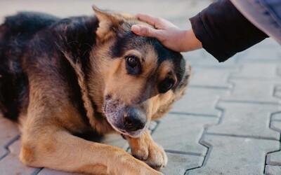 Ako sa darí zvieratám v bratislavskom útulku? Pandémia zvýšila počet adopcií, no desiatky psíkov strávia Vianoce bez rodiny