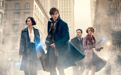 Ako sa podaril návrat do sveta Harryho Pottera? Prvé ohlasy na Fantastické zvery hovoria jasnou rečou
