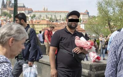 Ako sa robí špinavý biznis v centre Prahy: Koľko za hodinu zarobia trápením hadov či holubov a skákaním v medveďom kostýme?