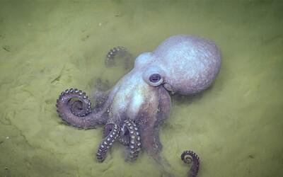 Ako vyzerá chobotnica na extáze? Prekvapivo podobne ako ľudia