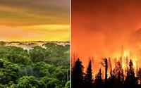 Amazonský deštný prales začal vytvářet více emisí CO2, než kolik jich absorbuje. Může za to zejména vypalování