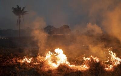 Amazonský prales dosáhl bodu, kdy začal ničit sám sebe