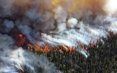 """""""Amazonský prales jsou plíce Země"""" – hloupost, většina kyslíku podle expertů vzniká jinde"""