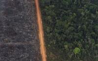 Amazonský prales opět v plamenech. Požárů je o třetinu více než loni