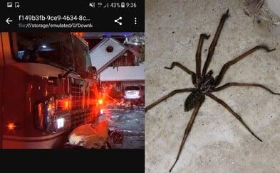 Američan nechtiac podpálil rodičovský dom, keď sa snažil zabiť pavúka horákom. Bojovať s ohňom muselo 29 hasičov
