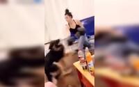 Američanka na videu boxuje so psom. V čiernych rukaviciach mu rozdáva rany ako v ringu