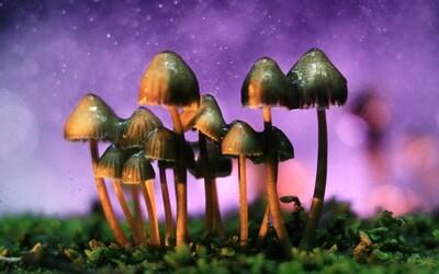 Americké mesto dekriminalizovalo psychedelické hubičky