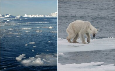 Antarktida a Grónsko tají velmi rychle, tímto tempem bude planeta čelit fatálním důsledkům