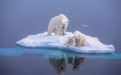 Apríl bol jeden z najhorúcejších mesiacov za posledných vyše 100 rokov. Teploty neustále stúpajú a ľadové medvede prichádzajú o domov