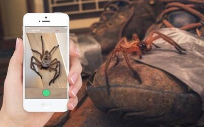 Australané dostanou Shazam pro hady a pavouky. Mobilní aplikace odhalí, zda tě konkrétní druh dokáže zabít