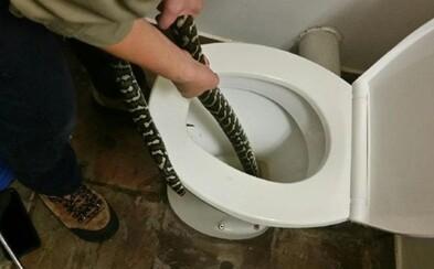 Australanku na záchodě kousla 1,5metrová krajta. Schovávala se v míse před extrémními teplotami