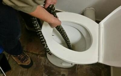 Austrálčanku na záchode uhryzol 1,5-metrový pytón. Schovával sa v mise pred extrémnymi teplotami