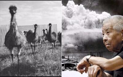 Austrália prehrala vojnu proti vtákom emu či muž, ktorý prežil Hirošimu aj Nagasaki. Aké historické fakty vám ešte vyrazia dych?