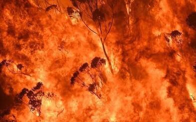 Australská fauna trpí, jen v Novém Jižním Walesu uhynulo na 500 milionů zvířat