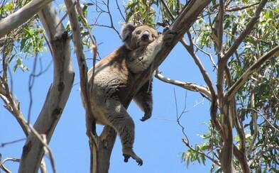 Austrálska príroda je nádherná, ale môže byť aj veľmi nebezpečná. Aké sú jej lákadlá a hrozby? (Rozhovor)