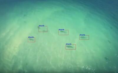 Austrálske pláže budú strážiť drony s umelou inteligenciou. Keď uvidia žraloka, ľudí upozornia megafónom