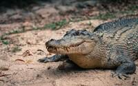 Australští rybáři našli v močálu mezi krokodýly nahého muže. Tvrdil, že se ztratil cestou na silvestrovskou oslavu