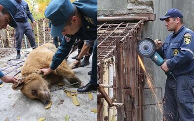 Až 10 rokov strávili v oceľovom pekle pri sledovaní hodujúcich ľudí. Dva medvede z Arménska konečne dostali späť svoju slobodu