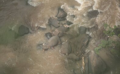 Až 11 slonov zahynulo v národnom parku v Thajsku. Snažili sa zachrániť mláďa, ktoré spadlo z vodopádu, čakal ich však rovnaký osud