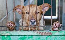 Až osm let natvrdo za týrání zvířat či provozování množíren. Český parlament posunul novelu zákona