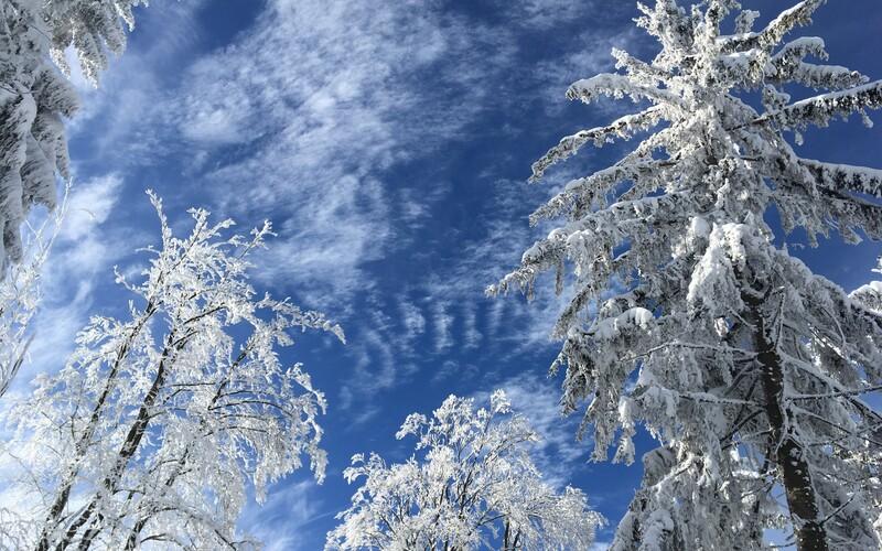 Zabudni na príjemné teploty, Slovensko koncom týždňa znovu zasiahnu mrazy. Záhradkári budú sklamaní, varuje SHMÚ.