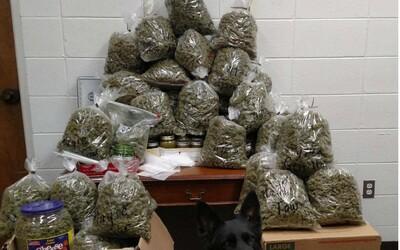 Babku a dedka zatkli s 27 kilami marihuany, ktorú vraj chceli rozdávať ako vianočné darčeky. Na ulici by ju mohli predať za skoro 300-tisíc