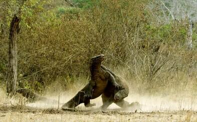 BBC oznamuje príchod dokumentu Planet Earth 2! Legendárna séria ukáže náš svet v pravom svetle