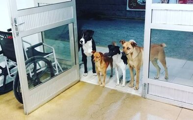 Bezdomovca v nemocnici jeho verné psy čakali pri vchode. Rozkošné zvieratá si zamiloval celý personál