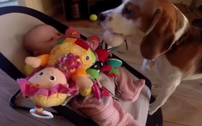 Bígl Charlie ukradol bábätku hračku a ihneď svoj čin oľutoval. Ako ospravedlnenie ho zahádzal hračkami