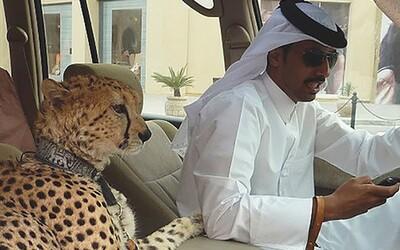 Bizarní situace a věci, které uvidíš zřejmě jen v Dubaji. Megalomanská metropole na ničem nešetří a lidé to zbožňují