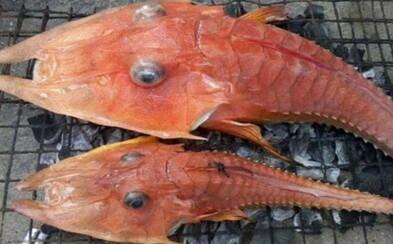 Bizarný hybrid ryby a krevety? Rybárom sa neďaleko tajomnej oblasti pri Austrálii podarilo chytiť zvláštneho živočícha