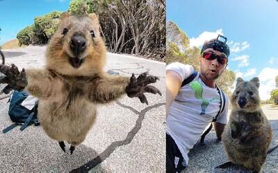 Boli na cyklistickom výlete, keď ich prepadla najroztomilejšia kengura na svete. Roztomilá Quokka je prítulná a ešte sa aj rada fotí