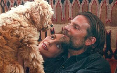 Bradley Cooper získal od organizácie PETA režisérske ocenenie za to, že do A Star is Born obsadil svojho psa