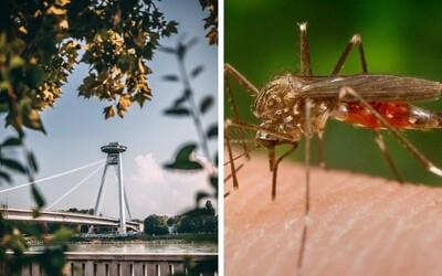 Bratislavu zaplavili komáre. Je to daň za krásnu prírodu, mohlo to byť horšie, vraví šéf lovcov komárov