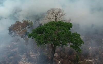 Brazília odmietla 20 miliónov od G7 na záchranu amazonských pralesov: Neviete sa postarať ani o Notre Dame