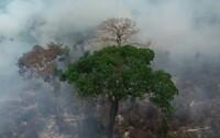 Brazílie odmítla 22 milionů od G7 na záchranu amazonských pralesů: Neumíte se postarat ani o Notre Dame