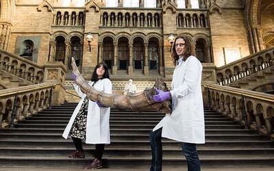 Britské přírodovědné muzeum bude vystavovat fantastická zvířata z kouzelnického světa Harryho Pottera