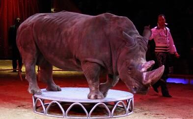 Brňané si nepřáli už žádné cirkusy se zvířaty. Město jim pozemky stejně pronajalo