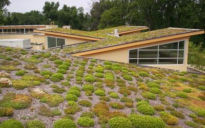 Brno investuje obrovské peniaze do zelených striech. Zadržujú vodu a ochladzujú mesto