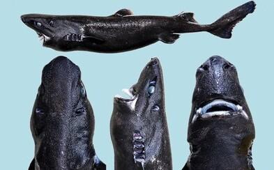Byl nalezen nový druh děsivého žraloka! Má temně černou kůži a dokáže i slabě svítit