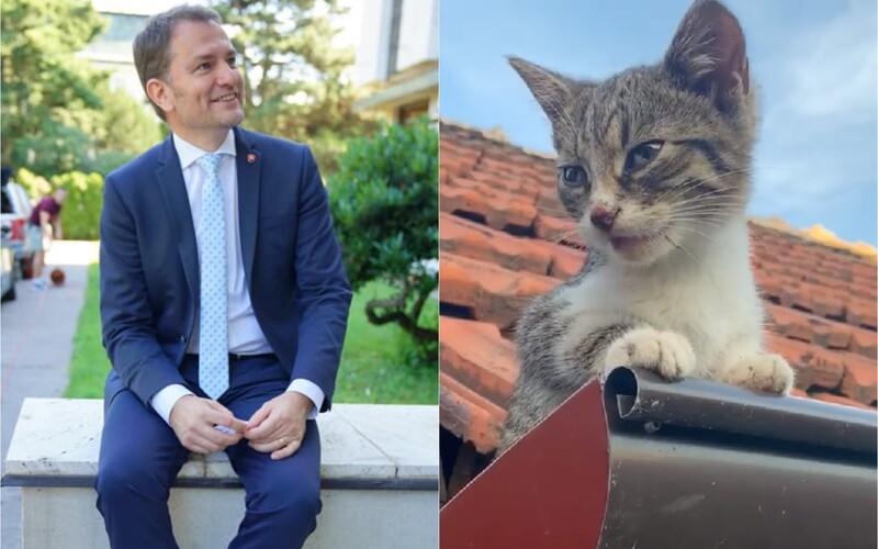 Igor Matovič sa opäť rozbieha na Facebooku, nakrúca mačiatko a nakladá rasistom: Ľudská tuposť nepozná hraníc.