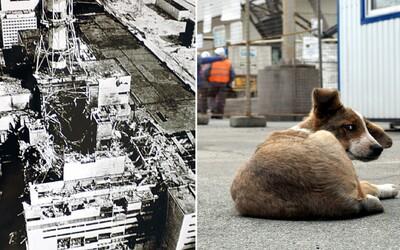 Černobyľská elektráreň vybuchla presne pred 34 rokmi, v jej okolí je stále živo. Môžeš si dokonca adoptovať šteniatko (Rozhovor)
