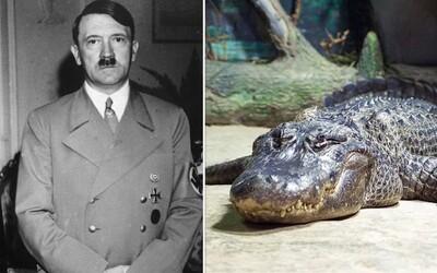 V moskevské zoo zemřel aligátor, který údajně patřil Adolfu Hitlerovi.