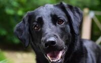 Čech podřízl svého psa a nechal ho vykrvácet. Prý kvůli tíživé životní situaci