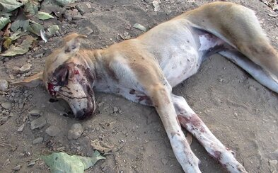 Čech svojho psa surovo obesil na kovovom obojku. Zviera pred smrťou hrozne trpelo