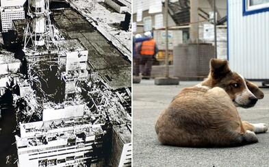 Černobylská elektrárna vybuchla přesně před 34 lety, v jejím okolí je stále živo. Můžeš si dokonce adoptovat štěně (Rozhovor)