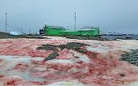Červený ľad na Antarktíde vyzerá ako z hororového filmu. Ide pritom o bežný jav, ktorý sa opakuje každý rok