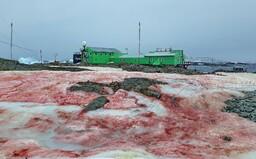Červený led na Antarktidě vypadá jako z hororového filmu. Jde přitom o běžný jev, který se opakuje každý rok