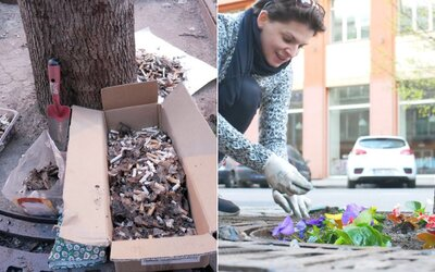Česi čistia ulice mesta od cigaretových ohorkov. Miesto nich vysádzajú kvety