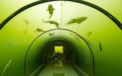 Česká obec ukrývá evropský unikát: Největší sladkovodní tunel v přírodě, o kterém jsi možná dosud neslyšel